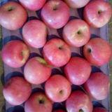 Buena calidad de Apple Qinguan fresco