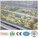 Le poulet de poulette met en cage le matériel de système