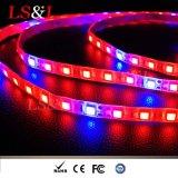 5050SMD Red+Blue LED 플랜트는 가벼운 끈 밧줄 지구 램프를 증가한다