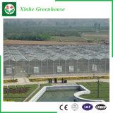 Листа поликарбоната пяди земледелия дом Multi зеленая для овощей