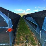 최신! ! ! 가장 새로운 농업 플라스틱 갱도 필름 온실