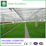 Horticultura de Qingzhou Xinhe Grennhouse