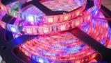 6: 3 빨간 파란 가득 차있는 스펙트럼 옥외 5050 LED는 지구 램프를 증가한다