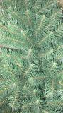 albero del canadese di 240cm