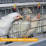 La bonne volaille de modèle posent des cages d'oiseau de poulet