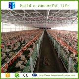 Preiswertes vorfabriziertstahlkonstruktion-Entwurfs-Geflügel bringen Bauernhof-Halle unter