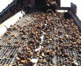 65のMn高炭素鉱山スクリーンの金網