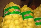Sacchetto della maglia della garza dei pp piccolo in agricolo per le frutta e le verdure dell'imballaggio
