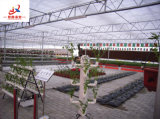 Pour la plantation de fleurs de serre stéréo