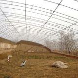 쉬운 모듈 철회 가능한 햇빛 식물성 딸기 오이 온실을 조립하십시오