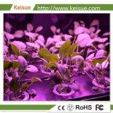 KeisueのHydroponic成長するプラスチック成長する皿