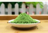 高品質の若いオオムギ草の粉