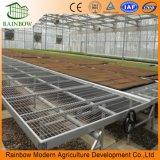 Handelslandwirtschafts-Gewächshaus-Walzen Benches beweglichen Seedbed