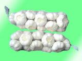 Reiner weißer und normaler weißer Knoblauch