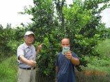 柑橘類の植わることのUnigrowの生物有機肥料