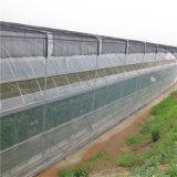 Serre van het Glas van de Systemen van lage Kosten de Commerciële Hydroponic voor Tomaat