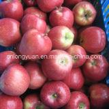 Gute Qualität frischer FUJI Apple