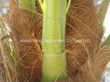 普及した擬似ハンドメイドの女性ヤシの木