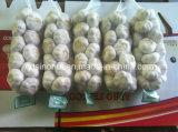 Новый сезон китайский свежего чеснока обычный белый и чистый белый