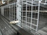 Het automatische Systeem van de Kooi van de Jonge kip voor het Landbouwbedrijf van het Gevogelte (het Frame van het Type van H)