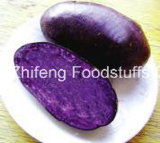 Chinese Yam Fresh Purple pour l'exportation