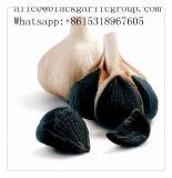 Bruch-Nachrichten über schwarzen Knoblauch