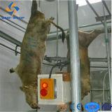 Завод Abattoir буйвола коровы скотин Bovine малый