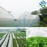 직물 Spunbond 짠것이 아닌 인기 상품 농산물은 농업과 뜰을 만들기를 위한 조경 Fabric/PP 부직포를 방수 처리한다