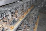 [بوولتري فرم] فرخة يحبس دجاجة تجهيز لأنّ عمليّة بيع (إطار)