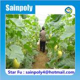 La meilleure serre chaude de tunnel de qualité de la Chine pour le melon de Hami