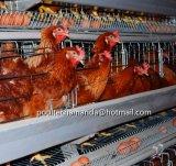 Клетки цыпленка слоя фермы с автоматическим оборудованием для Нигерии и Кении рамка