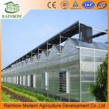 Kommerzielles Aluminiumlegierung-Rahmen-Polycarbonat-Gewächshaus