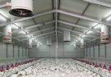 Горячая продажа оцинкованных заложить яйцо куриное Сфдз Coop куриное мясо птицы