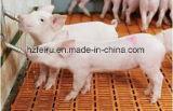 Корпус из нержавеющей стали Pig питьевой ниппель поилок на производство оборудования для сельского хозяйства