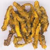 Estratto della radice del Coptis/polvere dorata dell'estratto 97% Berberine del cipresso