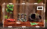 Aangepaste AcrylDoos voor ReptielDoos