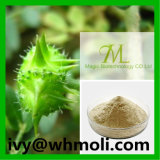 Natural Plant Extract Powder Tribulus Terrestris Extract CAS 90131-68-3