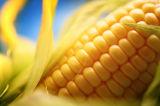 La maltodextrina en polvo para los edulcorantes de grado alimentario