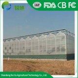 Multi-Span en polycarbonate pour la tomate de serre de la culture hydroponique commerciale la plantation