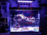 120W Aquarium LED Lights LED Aquarium Lighting met Sunrise Sunset