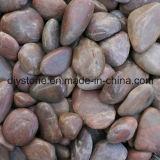 열광적인 판매에 의하여 세척되는 자갈 돌 훈장
