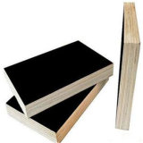 Película preta colagem Phenolic laminada do núcleo do Poplar da madeira compensada