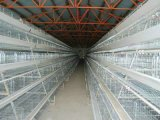 Cage d'animal familier de Chambre de clapier de cage de poulet pour de petits animaux