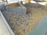 변형기와 엘리베이터를 가진 밀 옥수수 옥수수 벼 콩을%s 부는 유형 Destoner