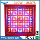 5 Years Warranty Full Spectrum IP67 300W Farming Seedling LED Grow Light for Greenhouse