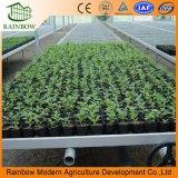 Seedbed di piantatura galvanizzato tuffato caldo della serra della Tabella