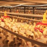 Equipo de las aves de corral en casa de pollo con diseño moderno