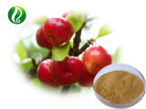 100% 녹는 최고 Vc Acerola 버찌 추출 분말