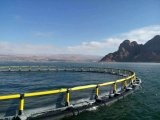 Castagnoles de mer profonde cultivant la cage de poissons
