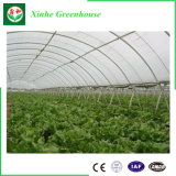Greenhouse 의 Easily Assembled Glass 정원 Greenhouse를 위한 플라스틱 Film